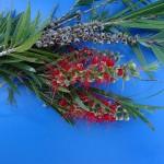Catalogação de flora