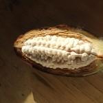 Coleta de popágulo reprodutivo