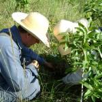 Levantamento botânico