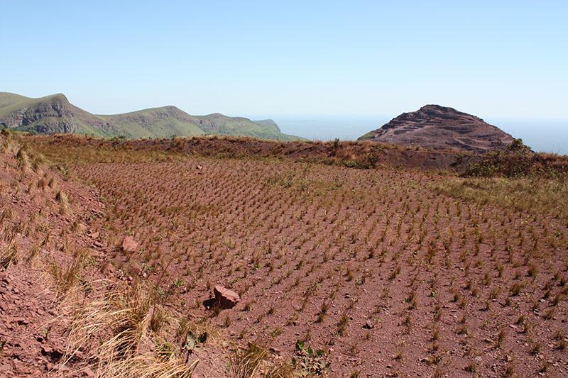 Área plantada