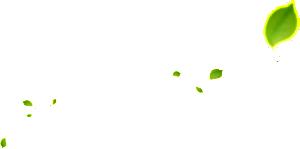 folhas-2